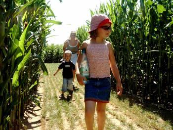 Irren im Mais - Maislabyrinth