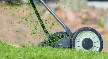 Jetzt mit dem richtigen Saatgut den Rasen fürs Frühjahr auf Vordermann bringen