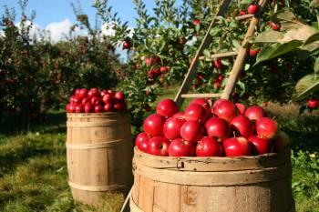 Rezepte aus Hessen rund um den Apfel