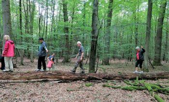 Gutscheine für Waldbaden in Laubach: Gemeinsame Zeit und Entspannung schenken