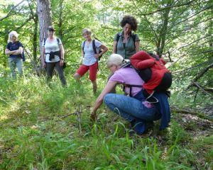 Den Sommer genießen bei einem Waldbad in Laubach